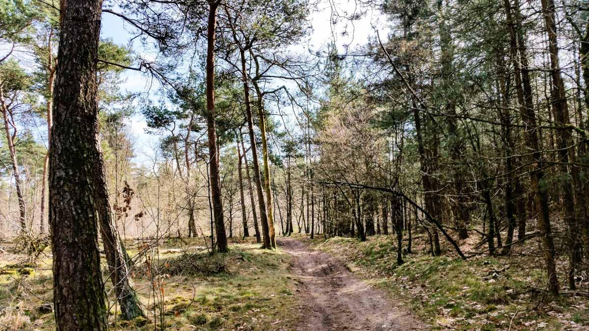 reekse-bossen.jpg